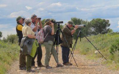 New Birding France website…